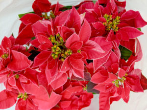Cover photo for Plant Disease and Insect Clinic Holiday Schedule
